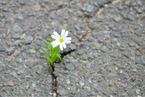 Flor en la carretera