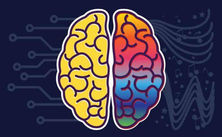 ¿Cuáles son las funciones de los hemisferios cerebrales?