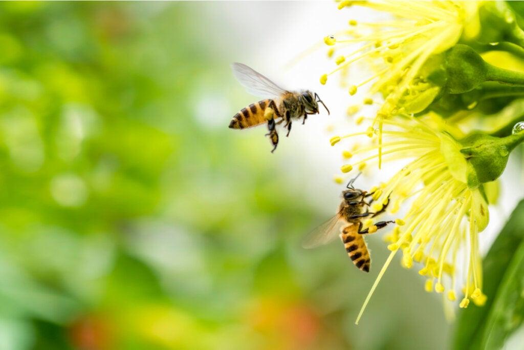 El miedo a las abejas o apifobia