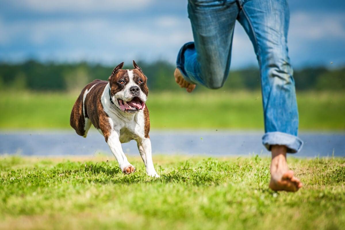 Hombre con cinofobia huyendo de un perro