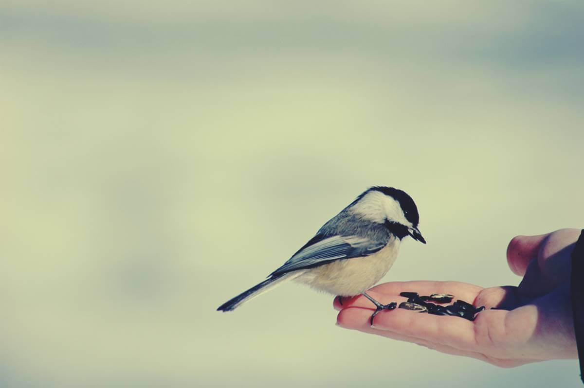 Mano sujetando pájaro simbolizando el ¿Por qué sentimos lástima?