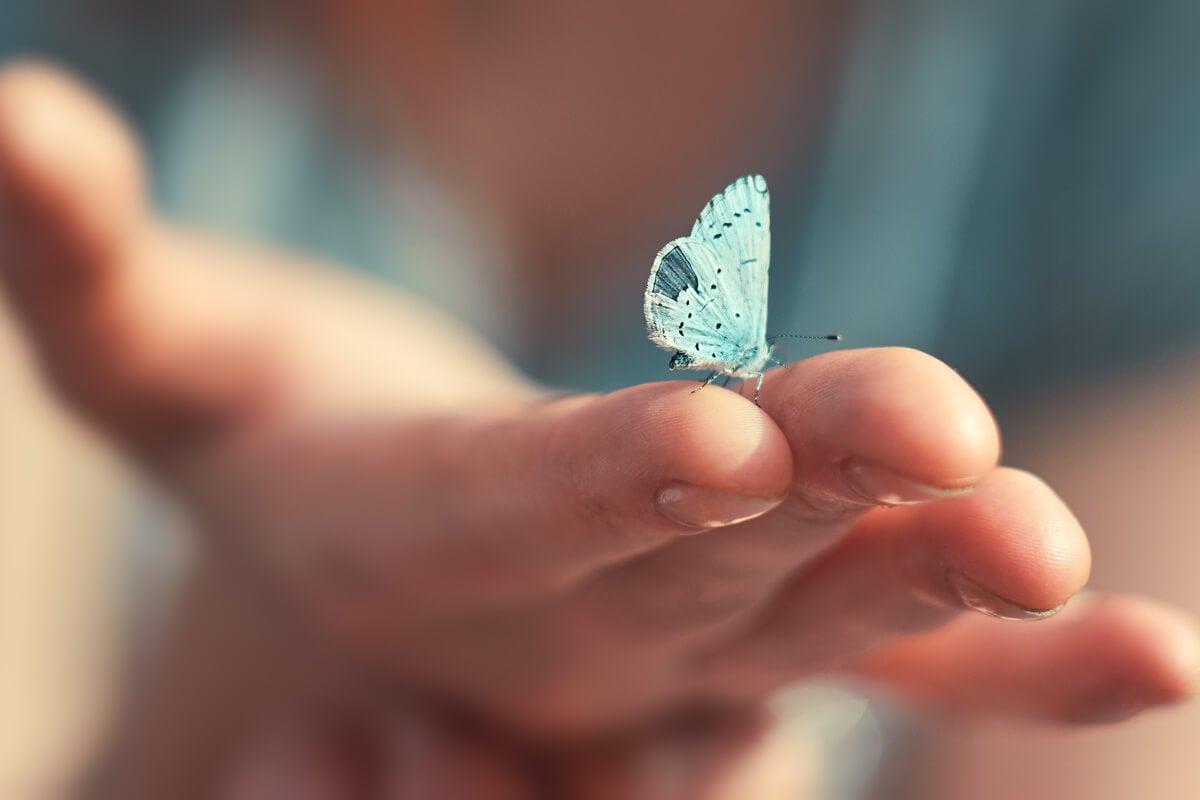 Mariposa azul sobre una mano