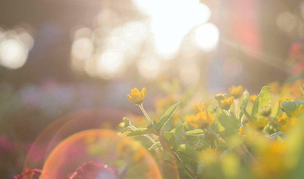 naturaleza bajo el sol representando el impacto de la fotofobia