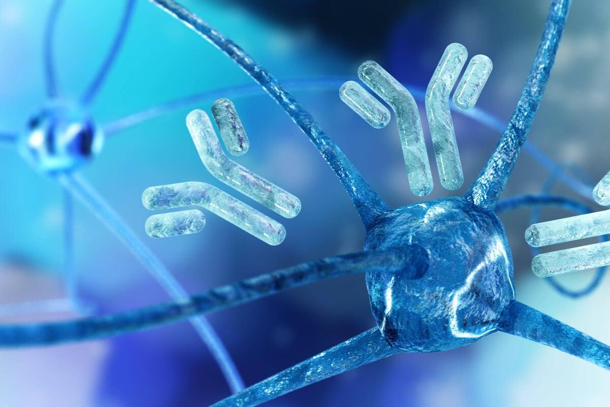 Neuronas y anticuerpos