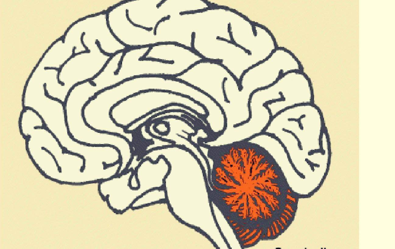 Imagen para representar la relación entre Cerebelo y pensamiento divergente