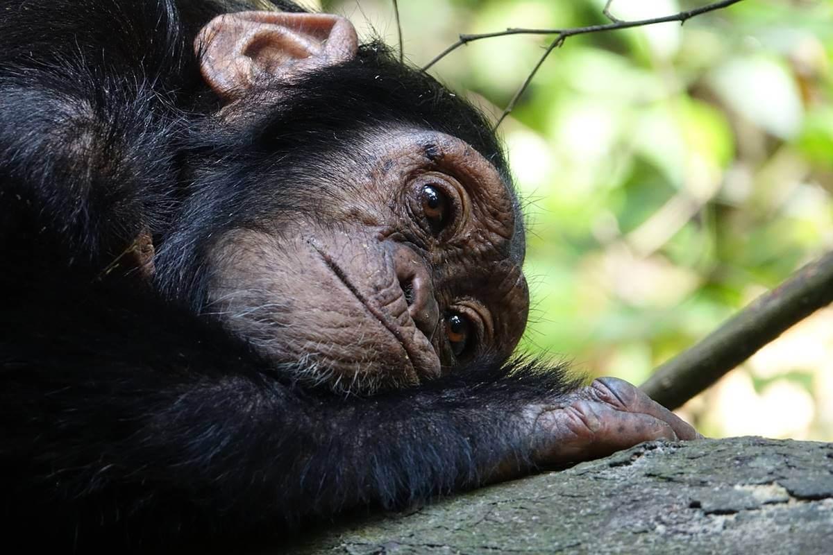¿Pueden los animales padecer enfermedades mentales?