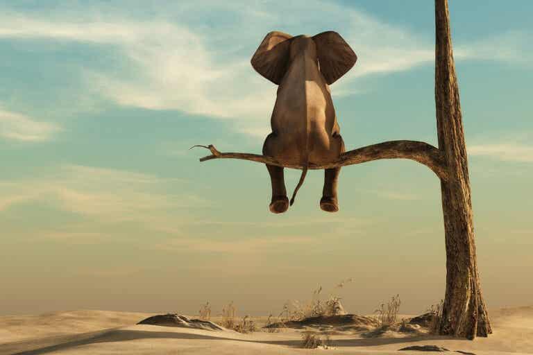 La gordofobia: el verdadero elefante de la sala