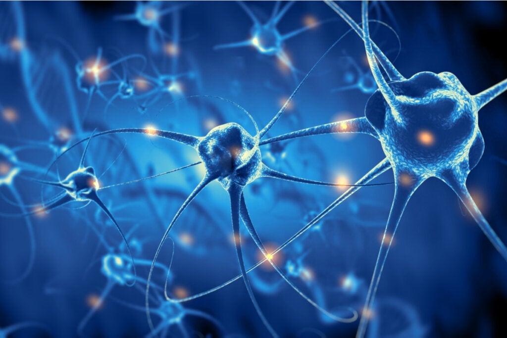 El cerebro crea nuevas neuronas hasta los 90 años, según un estudio