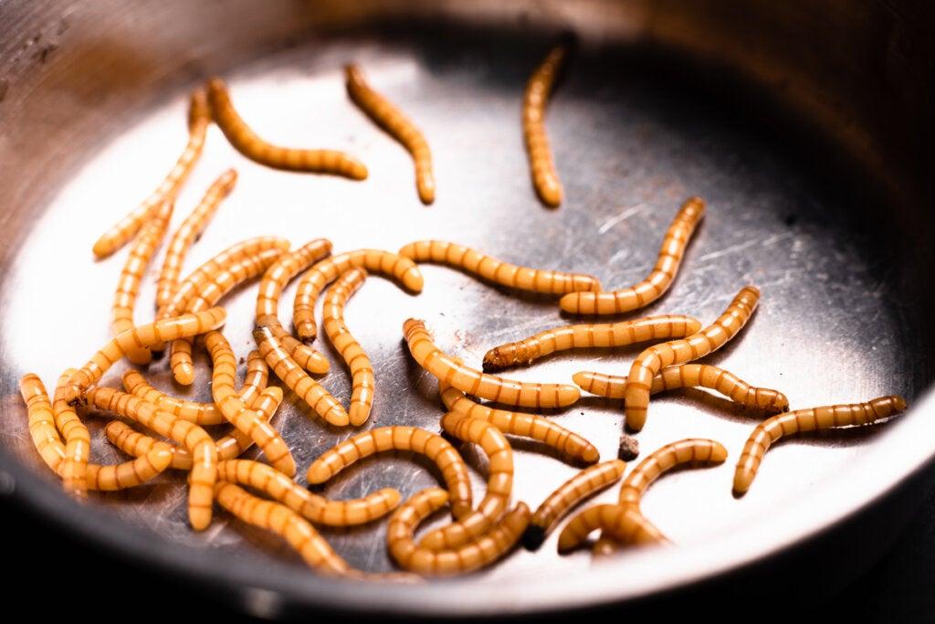 Vermifobia, el miedo a los gusanos
