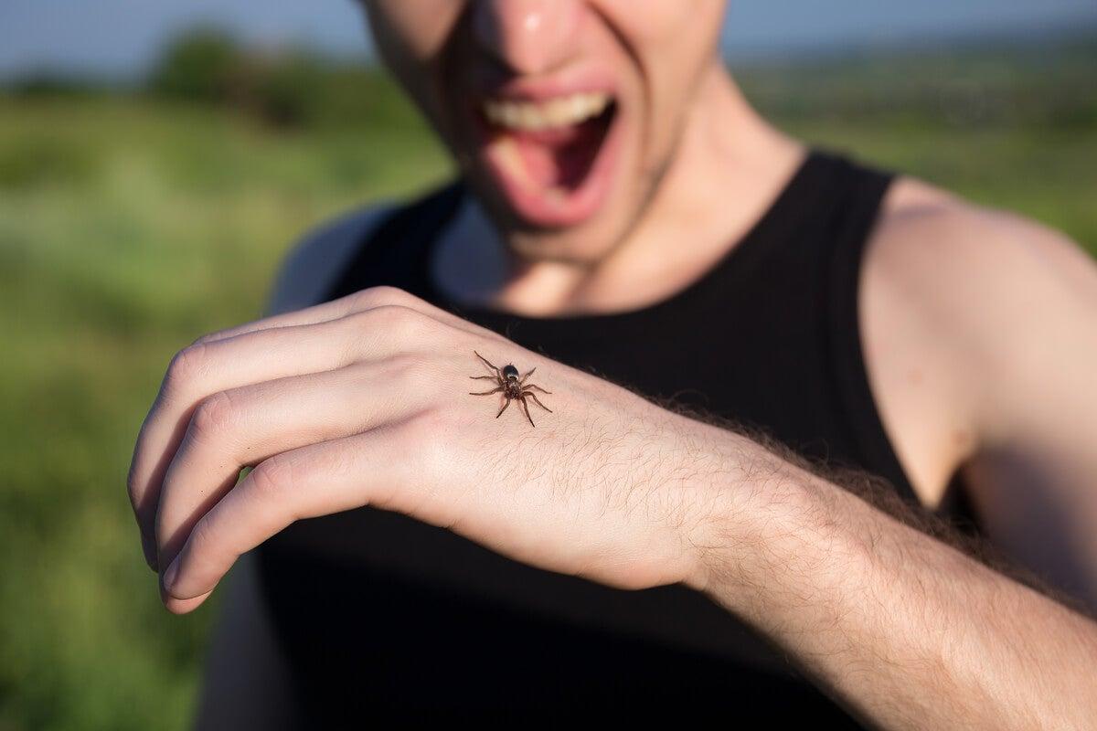Cómo superar el miedo a las arañas? - La Mente es Maravillosa