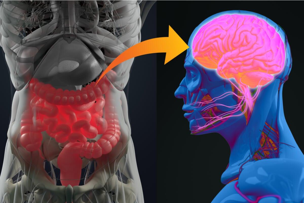 Microbiota intestinal y alzhéimer, ¿cómo se relacionan?