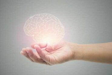 ¿Conoces la edad real de tu cerebro?