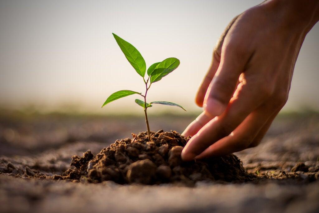 Mano cogiendo una planta del suelo