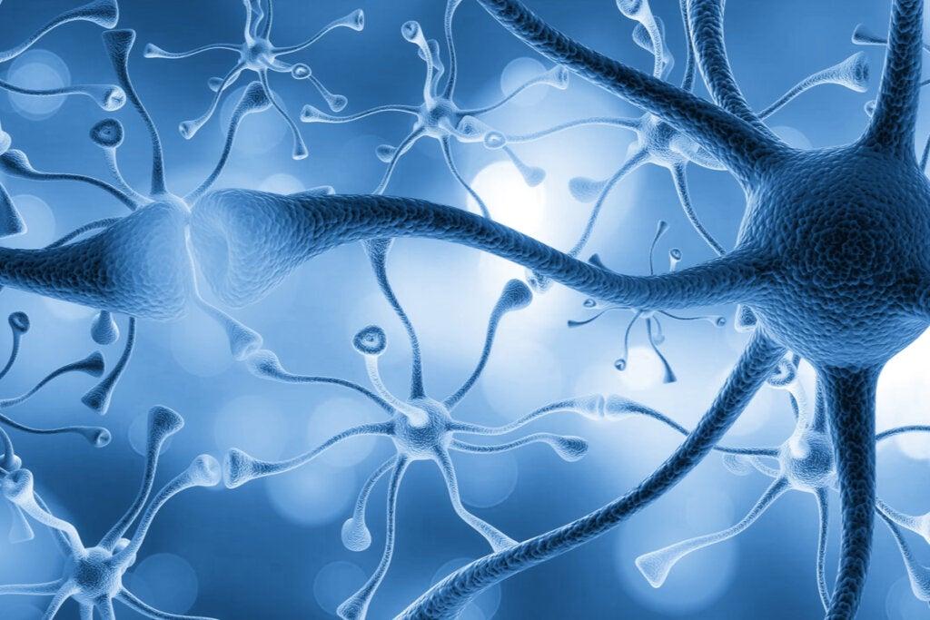 Neuronas conectadas
