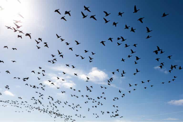 Cómo superar el miedo a los pájaros