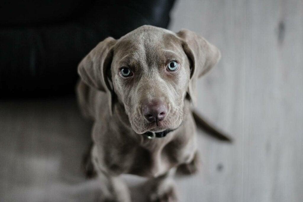 Ansiedad por separación en perros: ¿por qué ocurre y qué podemos hacer?