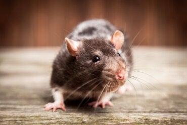 Miedo A Los Ratones O Musofobia Sintomas Y Tratamientos La Mente Es Maravillosa