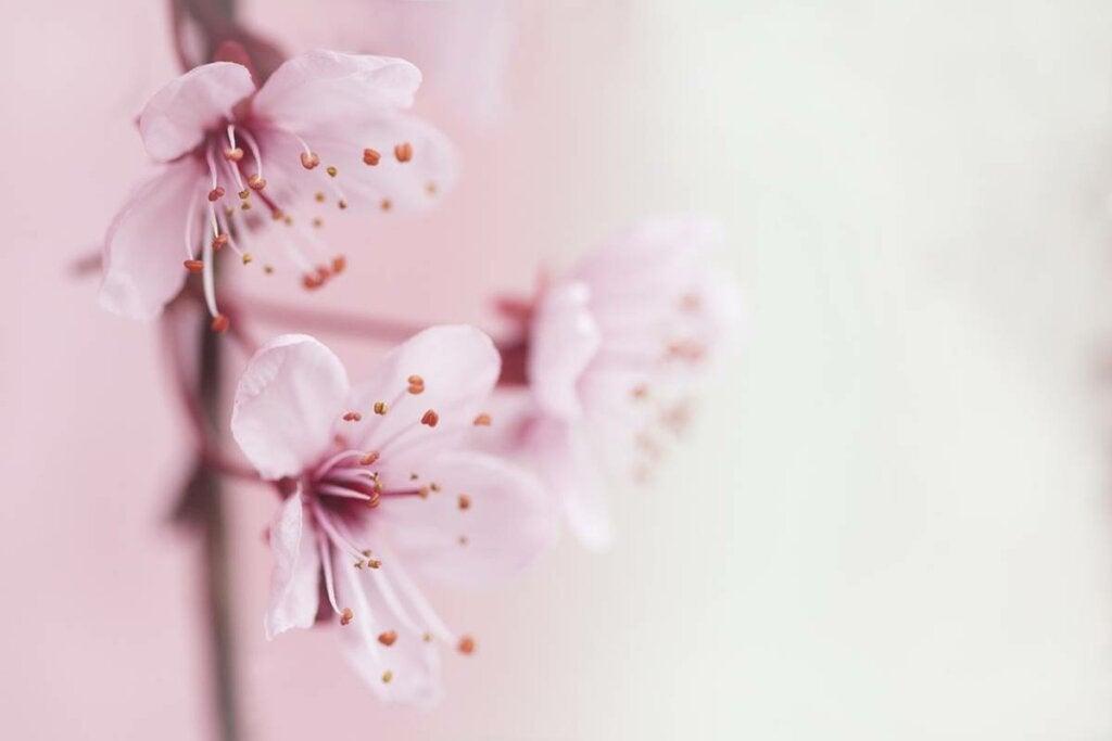 Flores de almendro para simbolizar cómo manejar el estrés en tiempos de crisis