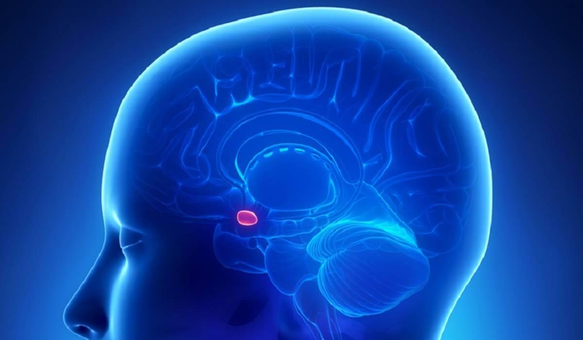Pituitaria liberando la hormona del crecimiento