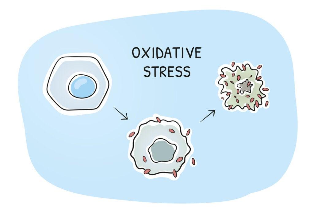 Células con estrés oxidativo