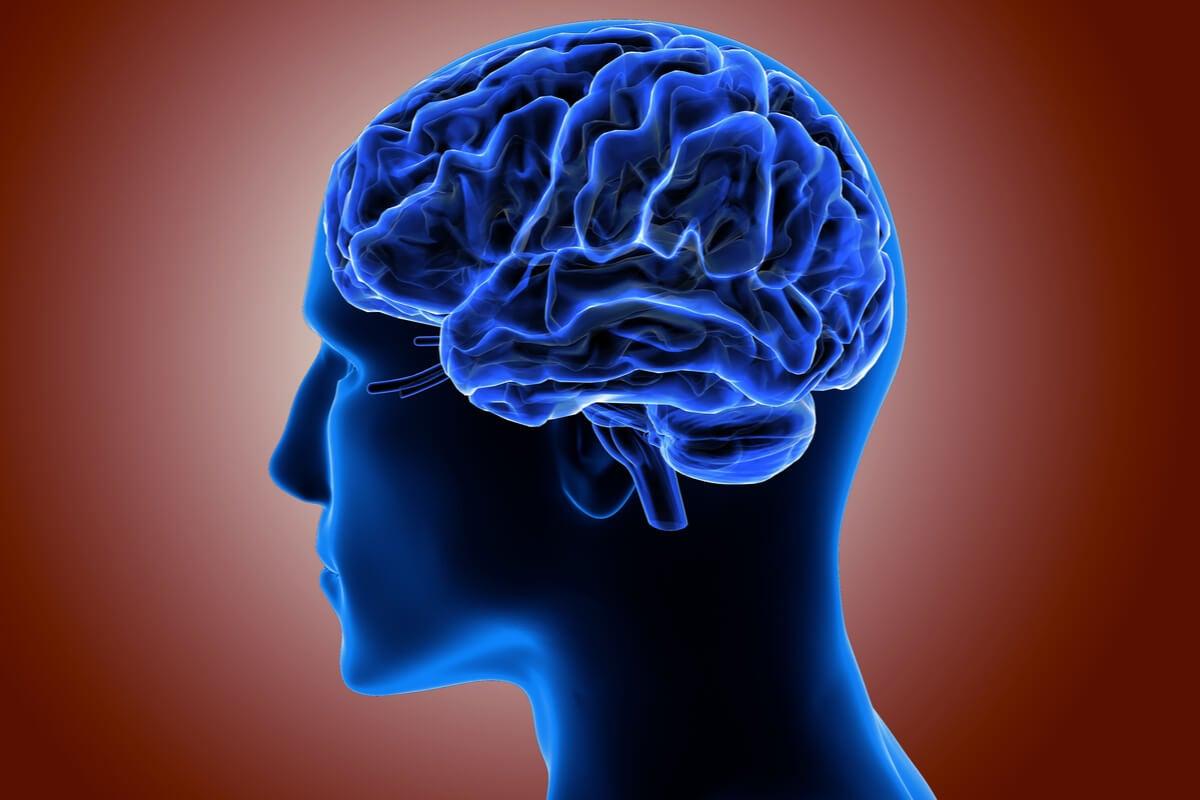 Corteza cerebral en 3D