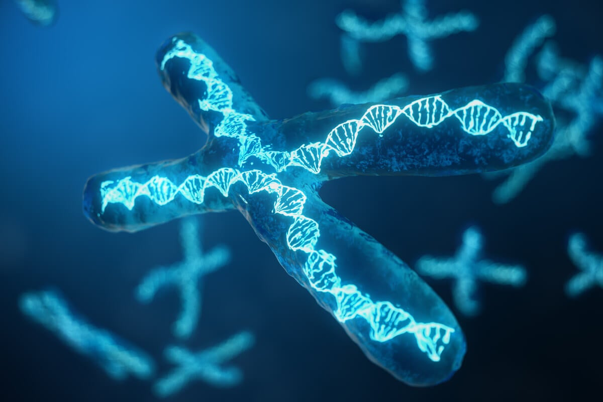Cromosoma en 3d