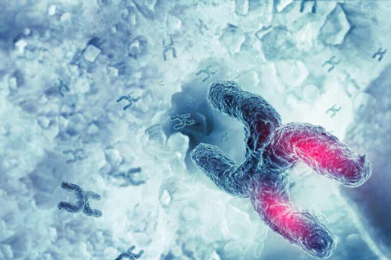 Síndrome X frágil: síntomas, causas y tratamientos