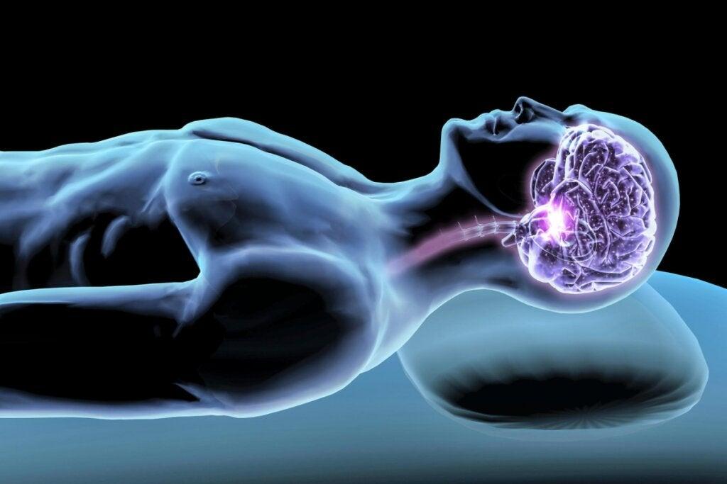 Hormonas del sueño: mediadoras de tu descanso