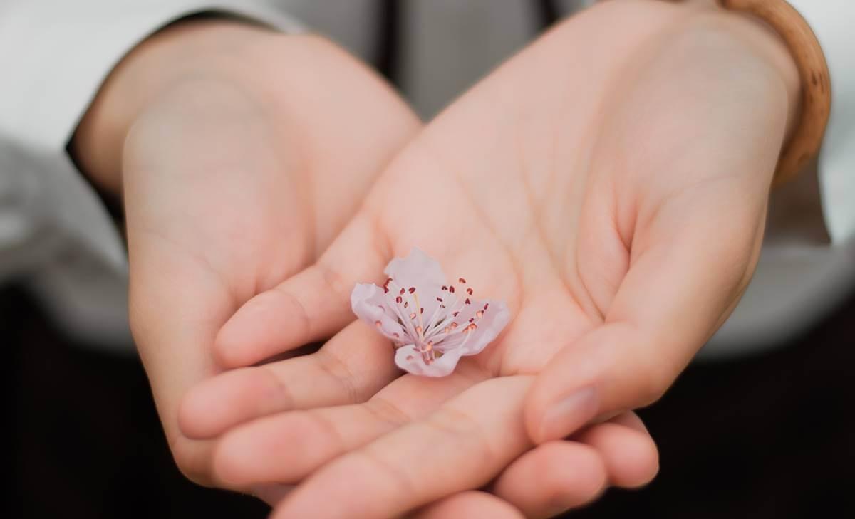 Manos con una flor representando la compasión humana