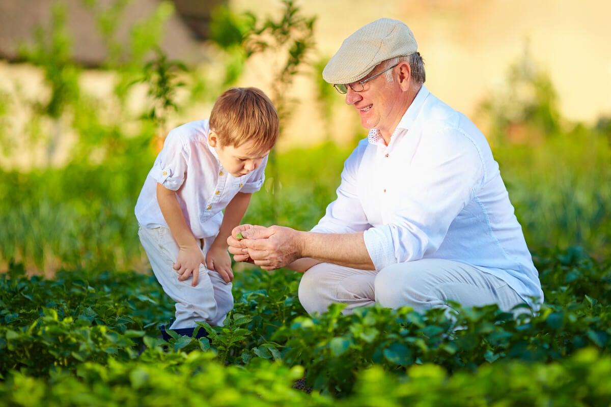 Niño con abuelo recogiendo frutas