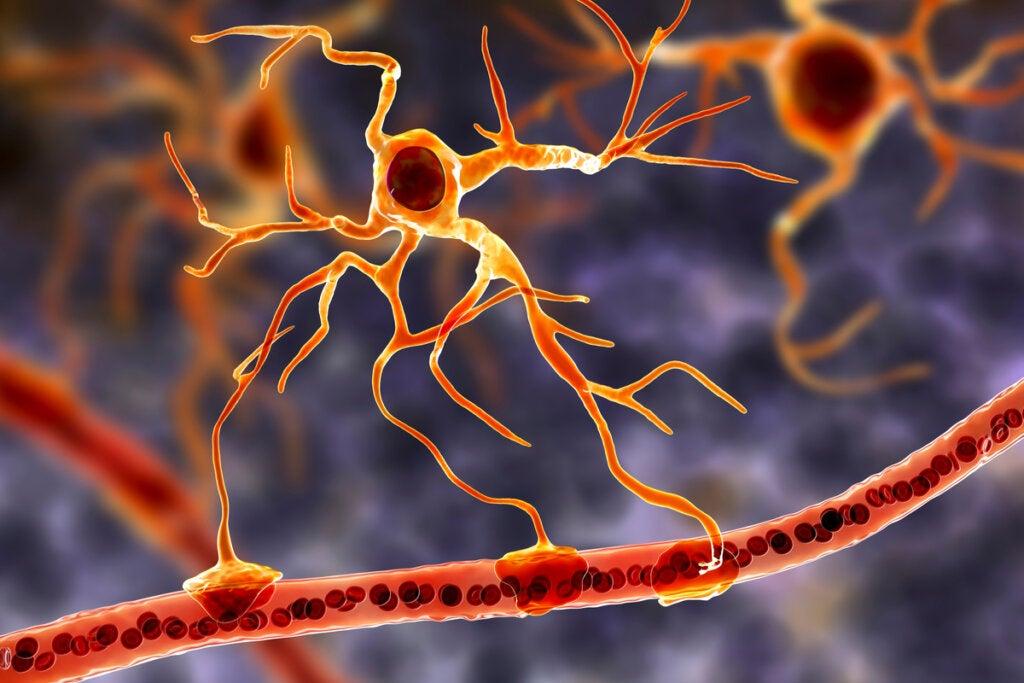 Las células gliales: la base funcional del cerebro