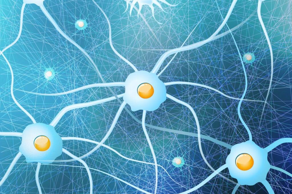 Células gliales con neuronas