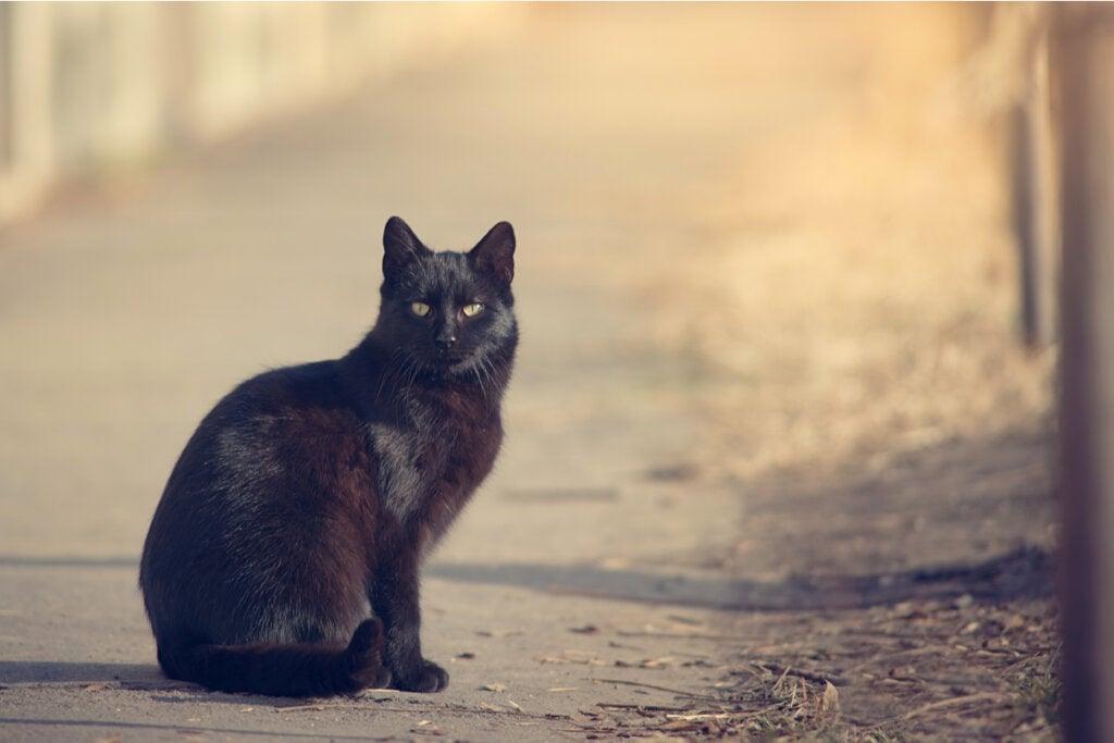 Gato negro en una carretera representando el principio de curiosidad