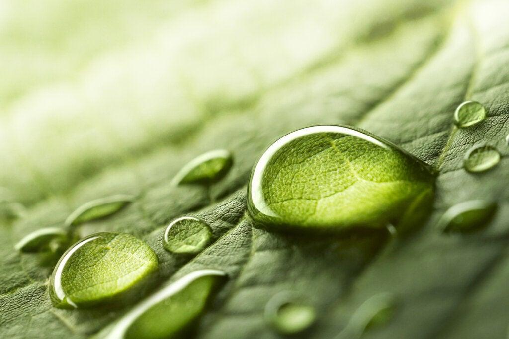Gotas de agua sobre hojas