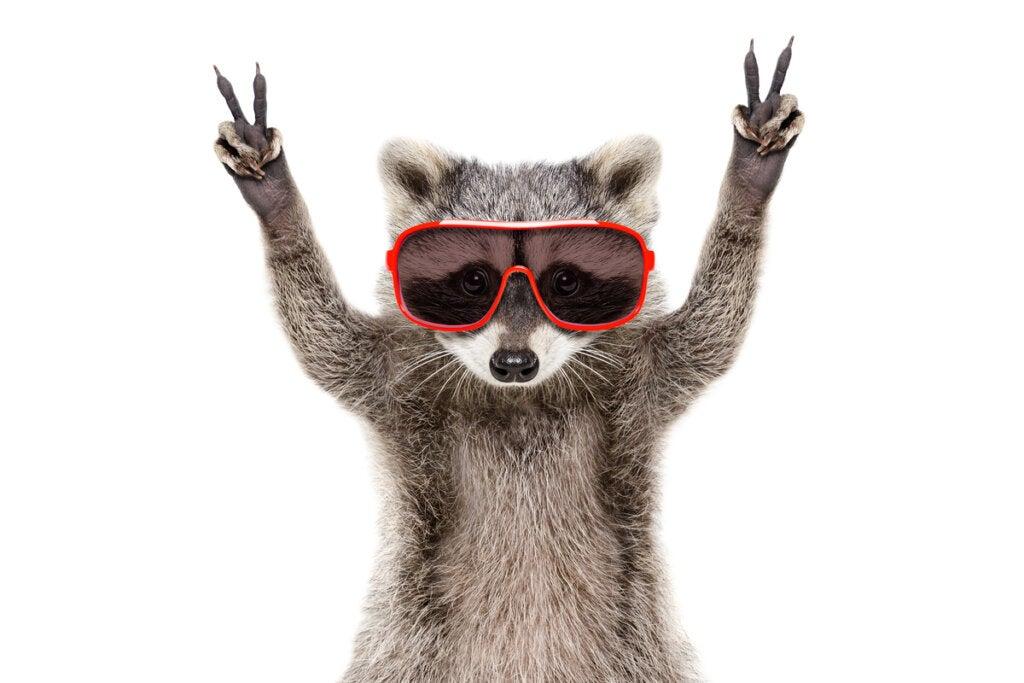Animal con gafas de sol