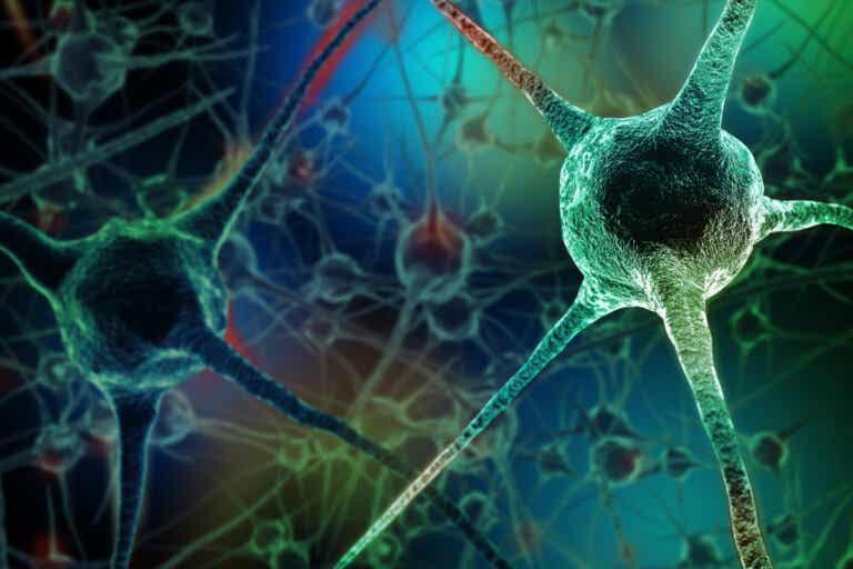 7 hábitos que matan neuronas