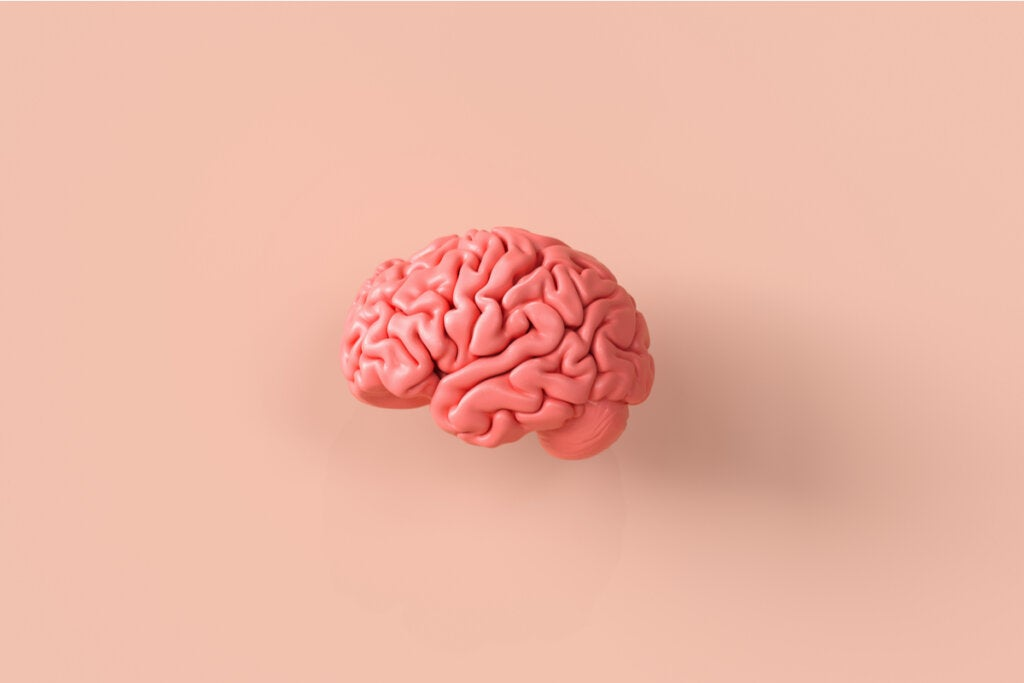 El modelo pedagógico de los cuatro cerebros