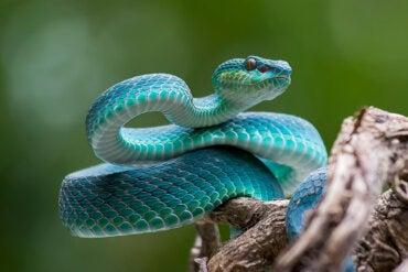 Qué Significa Soñar Con Serpientes La Mente Es Maravillosa