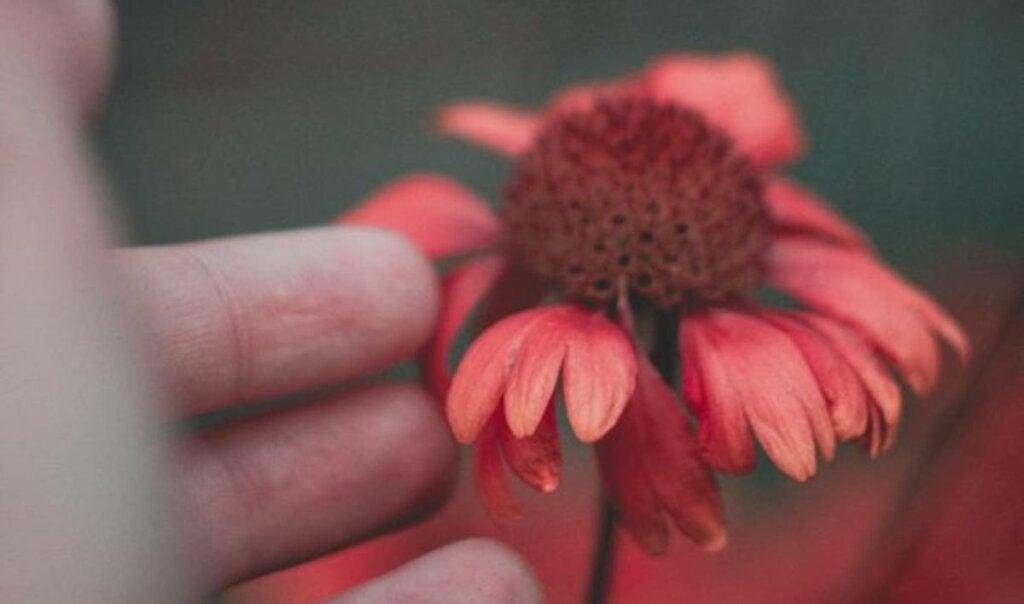 flor roja simbolizando la autoempatía
