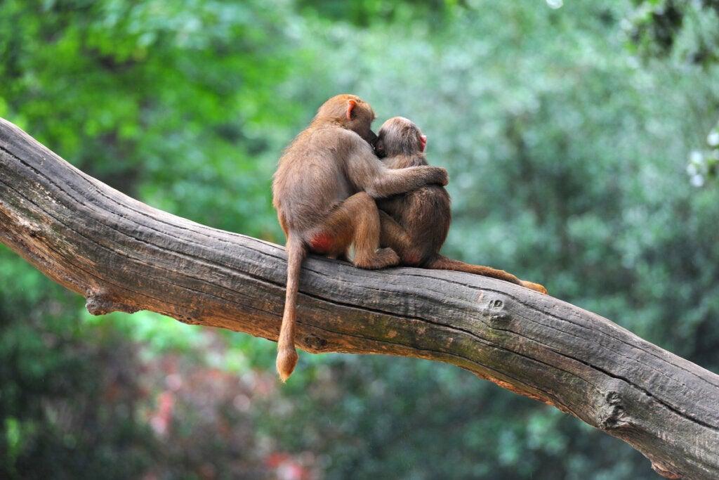 ¿Hay empatía en los animales?