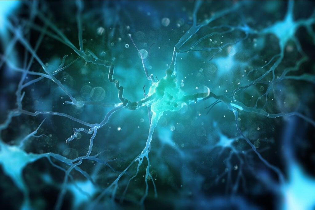 Las células madre neuronales: la autorregeneración cerebral