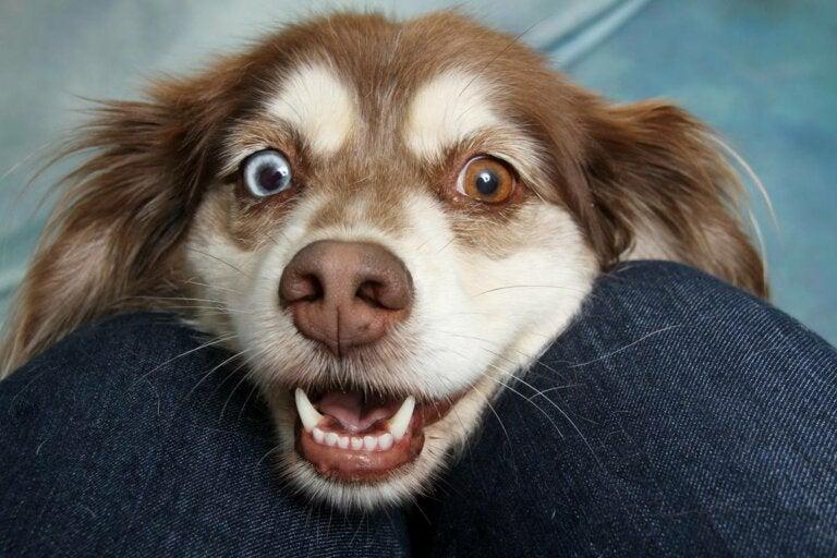 Enseñar a hablar a los perros, la nueva moda