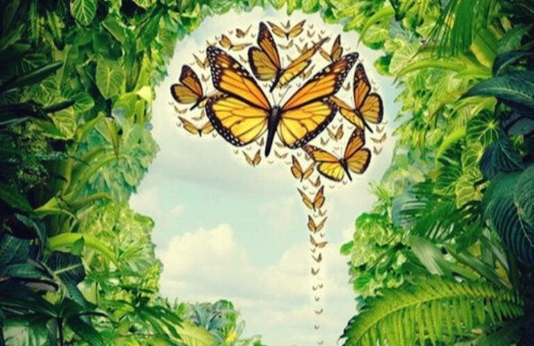 Mente de mariposa: la creatividad desbocada, pero poco útil