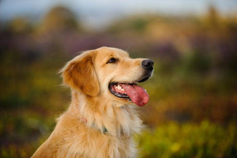 Los 18 perros más inteligentes