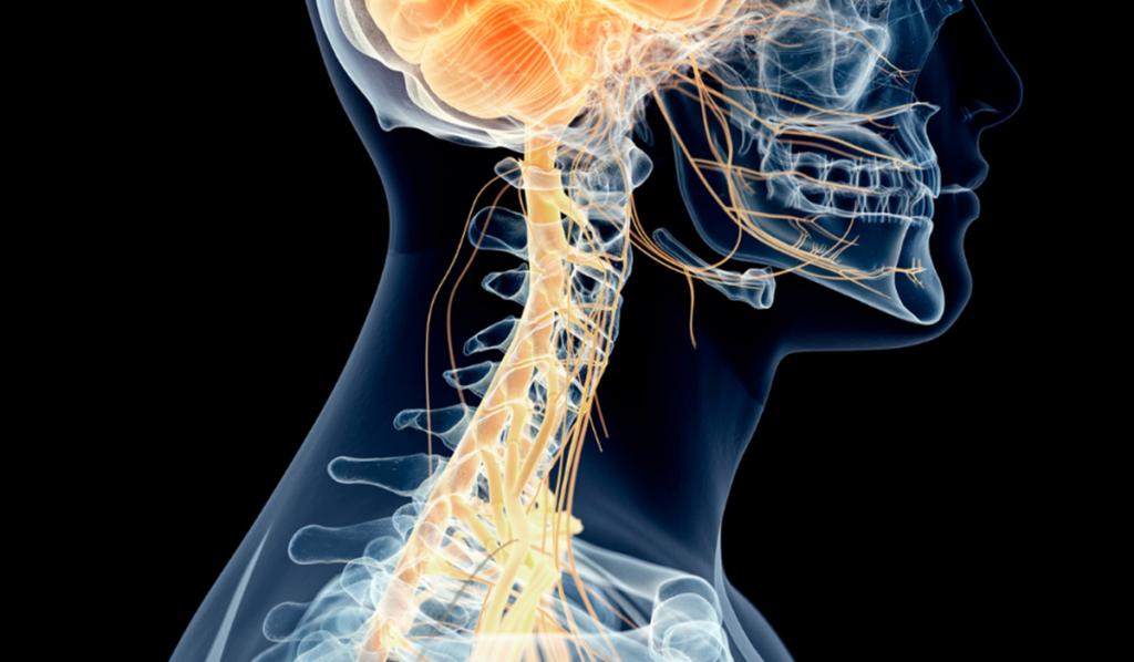 imagen representando el vínculo entre Nervio vago y alimentación