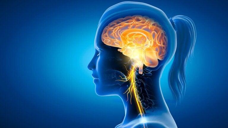 Nervio vago y alimentación: ¿cómo se relacionan?