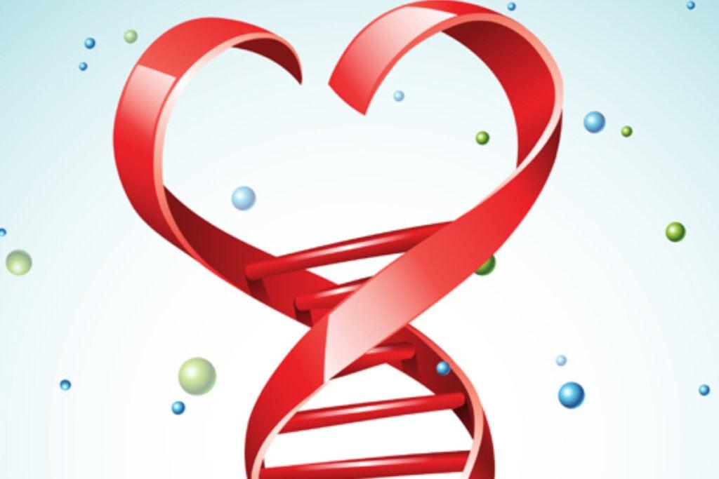 ADN con forma de corazón