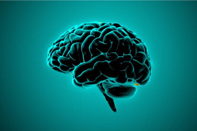 Cerebro de las personas violentas, lo que dice la neurociencia