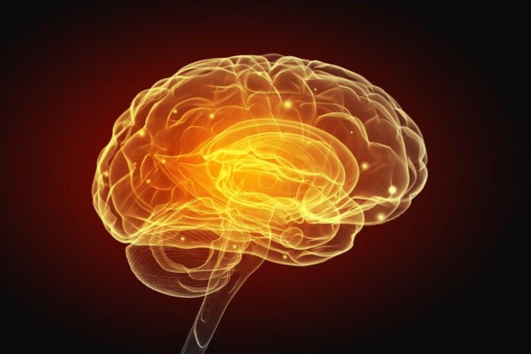 Así cambia el cerebro con los actos egoístas