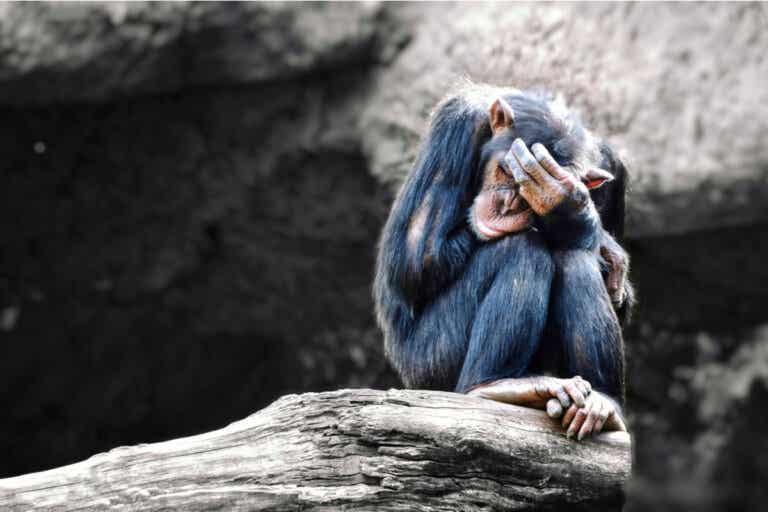 ¿Los animales pueden tener depresión?